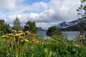 Bergsee_Nord-Norwegen